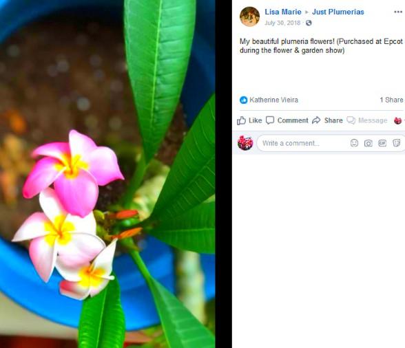 pink plumeria epcot