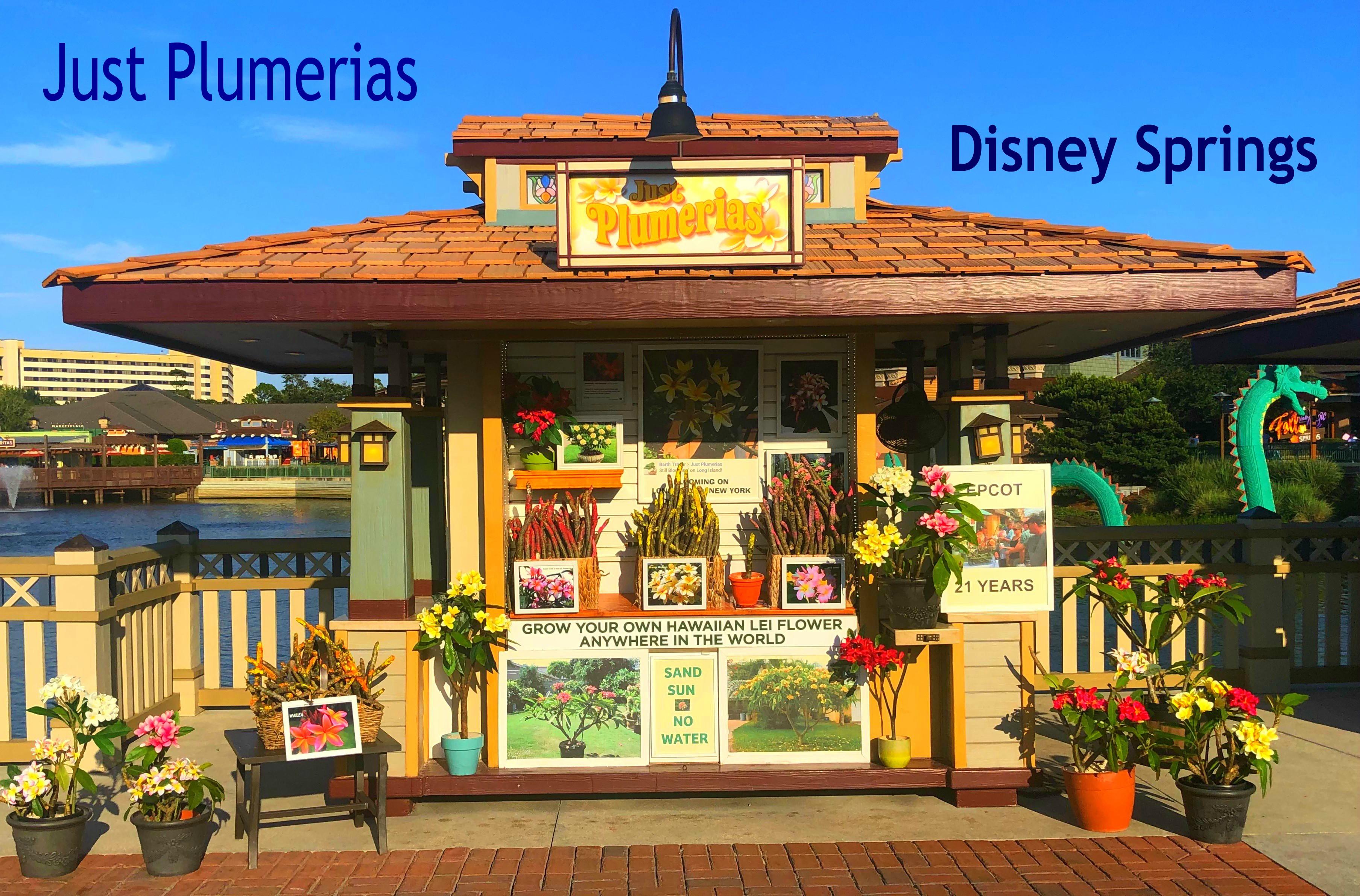 Plumeria At Disney Springs